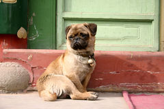 Dog in china Royalty Free Stock Photography