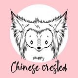 Dog, Chinese Crested head  on white background. Vector illustration, design element for cards, banners and other Stock Images