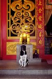 A Dog in a Chinese Temple. A dog sitting in a Chinese temple near a statue stock photography