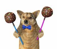 Dog with chocolate cake pops stock photos