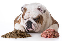 Dog choosing kibble Stock Photo