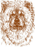 Dog chow chow. Vector drawing of a portrait of a dog chow chow Royalty Free Stock Photography