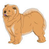 Dog chow chow red Stock Images