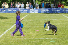Dog Chow Disc Cup in Wroclaw, Poland Juni 1, 2014 Stock Images