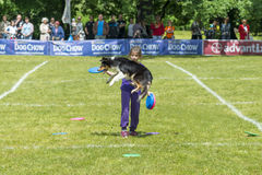 Dog Chow Disc Cup in Wroclaw, Poland Juni 1, 2014 Stock Photography