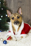 Dog in Christmas atmosphere Stock Images