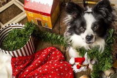 Dog Christmas cards Royalty Free Stock Photography