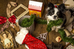 Dog Christmas cards, naughty puppy Royalty Free Stock Photography