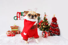 Dog with Christmas Royalty Free Stock Photos