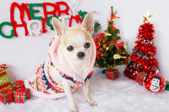 Dog with Christmas Royalty Free Stock Photography