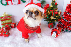 Dog with Christmas Royalty Free Stock Photo