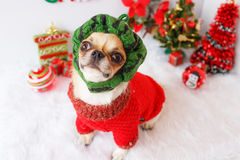Dog with Christmas Royalty Free Stock Images