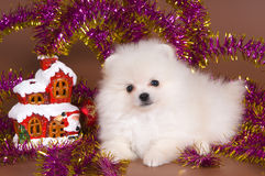 Dog with Christmas decorations Royalty Free Stock Photos
