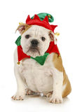 Dog christmas elf stock photography