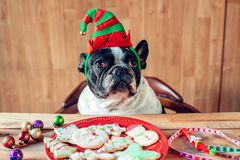Dog with Christmas elf hat Royalty Free Stock Photos