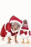 Dog with christmas figure Royalty Free Stock Photos