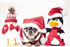 Dog with christmas figures Stock Images
