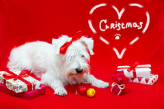 Dog with Christmas gifts Royalty Free Stock Photo
