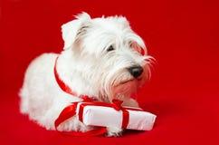 Dog with Christmas gifts Stock Image