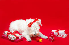 Dog with Christmas gifts Stock Images