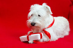 Dog with Christmas gifts Royalty Free Stock Images