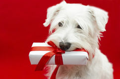 Dog with Christmas gifts Stock Photos