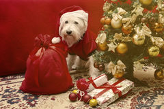 Dog with Christmas gifts Royalty Free Stock Image