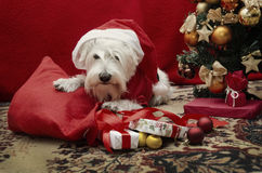Dog with Christmas gifts Royalty Free Stock Photos