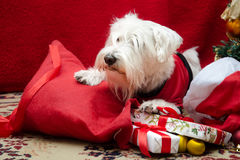 Dog with Christmas gifts Royalty Free Stock Photography