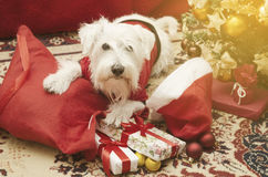 Dog with Christmas gifts Stock Photography