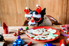 Dog with Christmas glasses Stock Photography