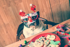 Dog with Christmas glasses Royalty Free Stock Image
