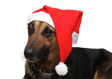 Dog in the Christmas Hat. Dog in the Santa Claus Hat Royalty Free Stock Photography