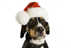 Dog with Christmas hat. Dog with a Christmas hat (cute Royalty Free Stock Photography