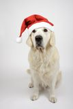 Dog with christmas hat Royalty Free Stock Photos