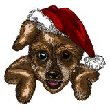 Dog. With a Christmas hat Stock Photos