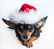 Dog in a Christmas hat Stock Images