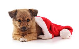 Dog in a Christmas hat. Dog in a Christmas hat on a white background Royalty Free Stock Image