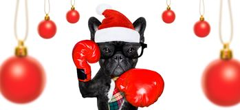 Dog on christmas holidays stock photo