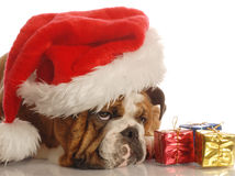Dog with christmas presents Stock Photos