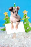 Dog on Christmas sign Royalty Free Stock Photos