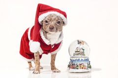 Dog with christmas snowglobe Royalty Free Stock Images