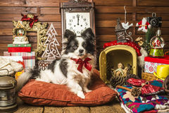 Dog at Christmas time Stock Photos
