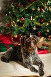 Dog and Christmas tree Stock Image