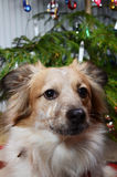 Dog and the christmas tree royalty free stock images