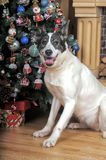 Dog in Christmas Royalty Free Stock Photography