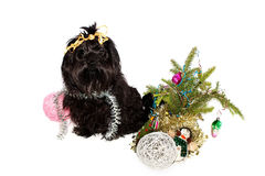 Dog at Christmas tree Royalty Free Stock Photos