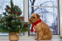 Dog  and a Christmas tree on the windowsill Royalty Free Stock Photos