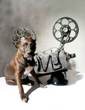 Dog and cinema Royalty Free Stock Photography