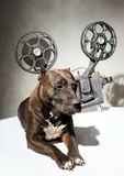 Dog and cinema Royalty Free Stock Photo